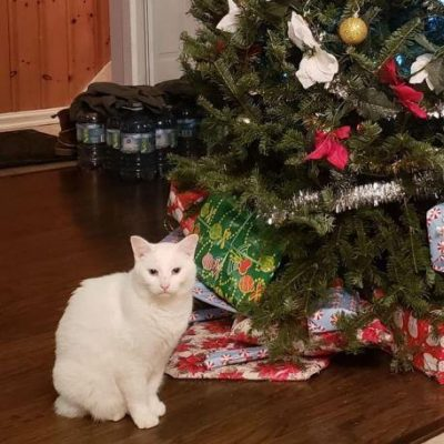 Cat sitting in front of a Christmas Tree