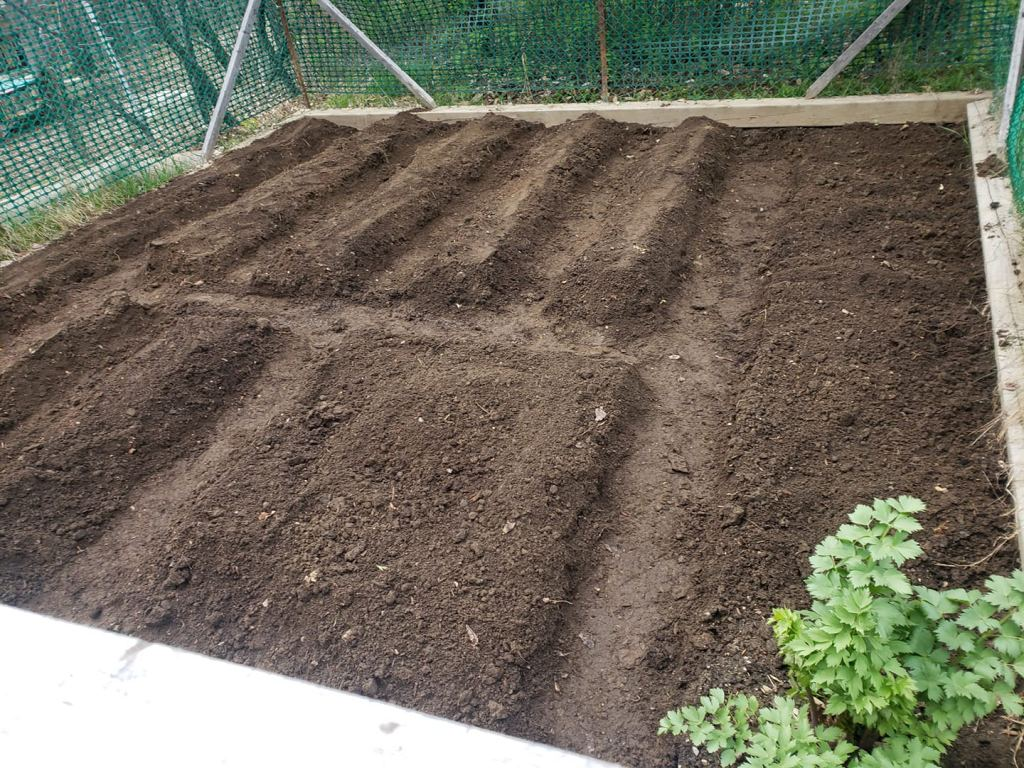 spring garden bed prepared to be planted